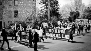 No New Animal Lab